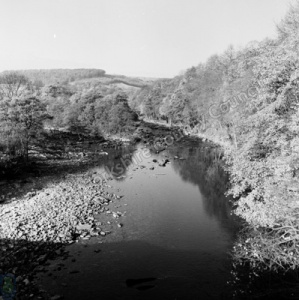 River Swale, Whitecliffe Woods